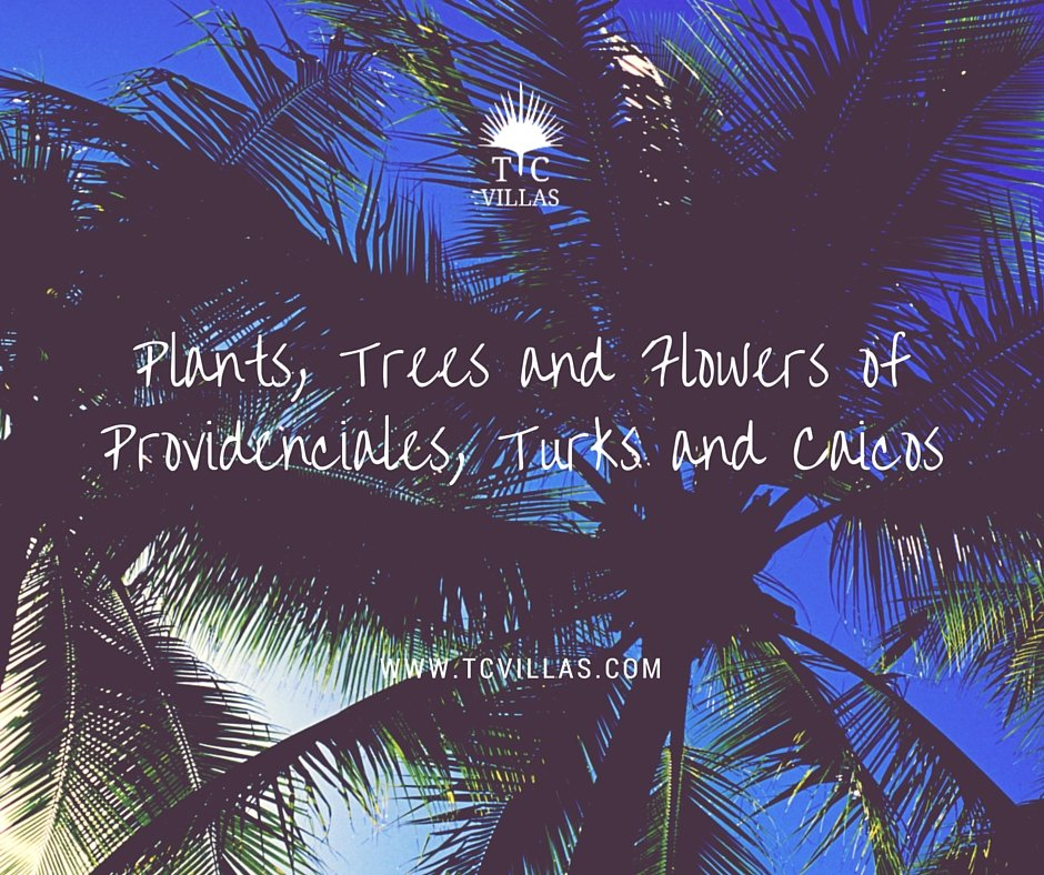Plants, Trees and Flowers of Providenciales, Turks and Caicos