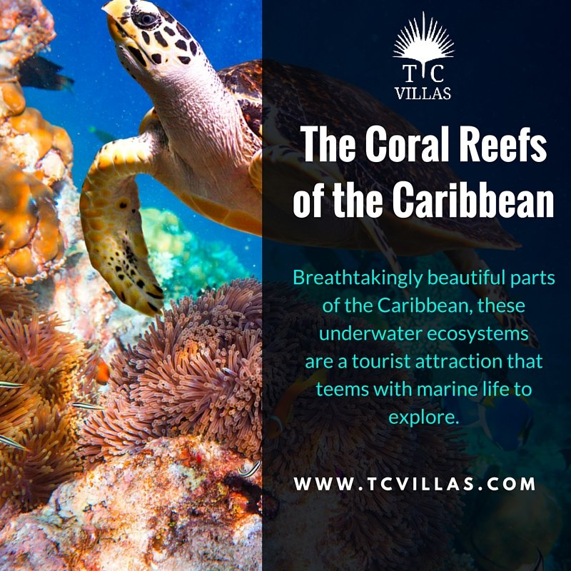 The Coral Reefs of the Caribbean