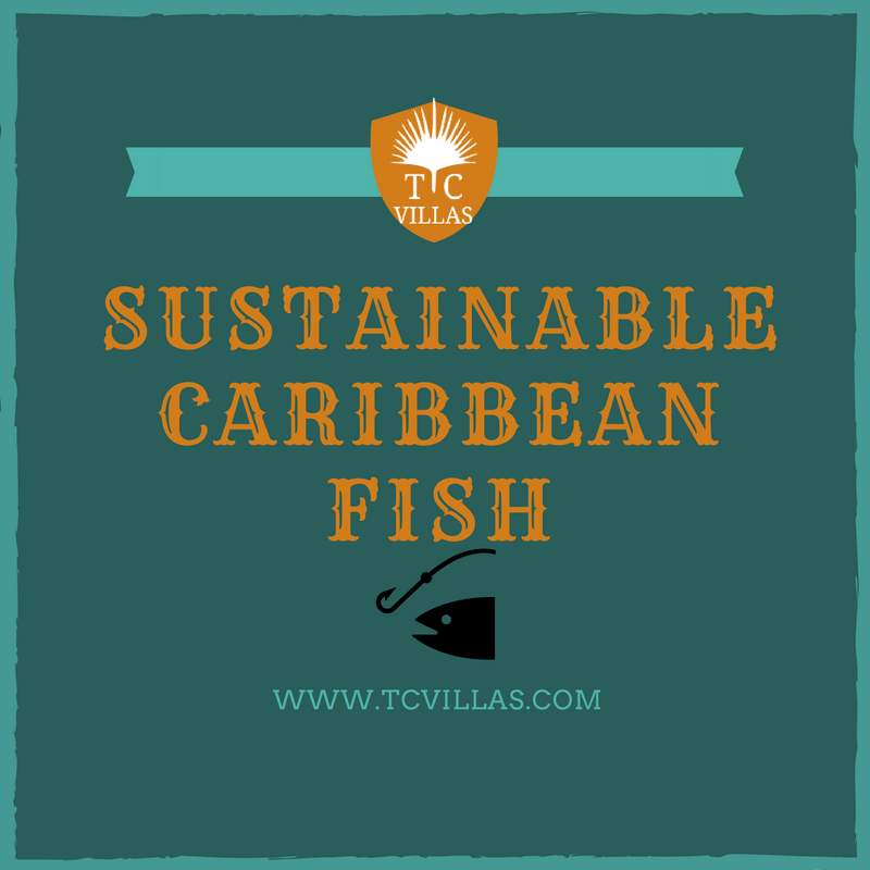 SustainableCaribbeanfish