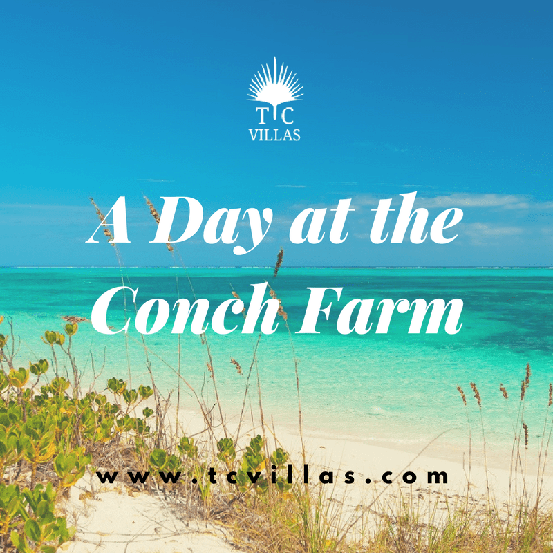 A Day at theConch Farm