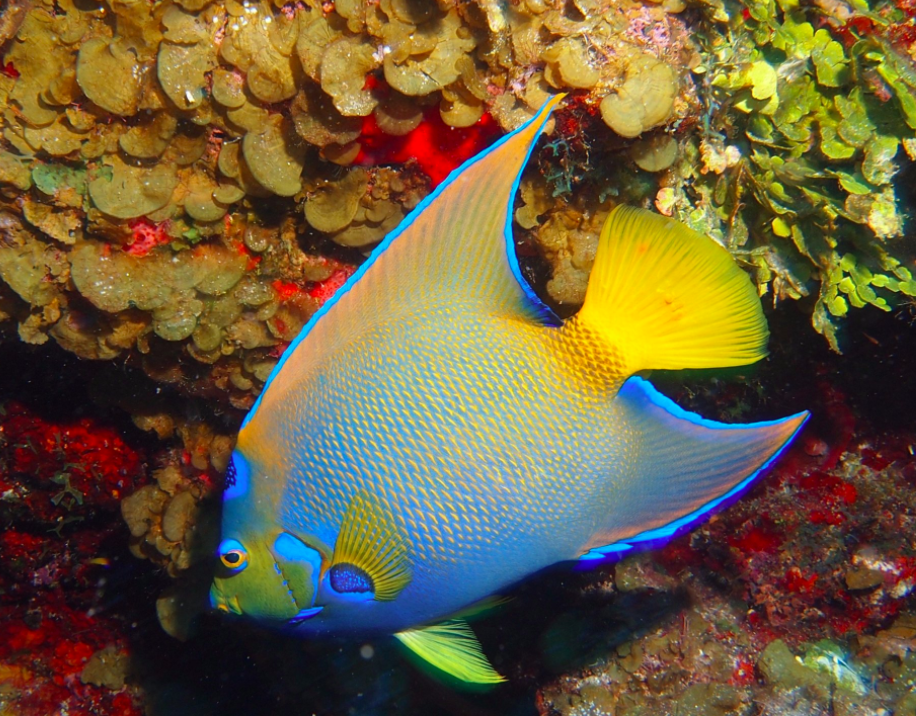 Colorful Fish in Turks and Caicos