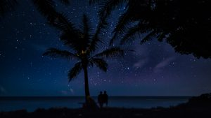 Stargazing with palm trees in the Turks and Caicos