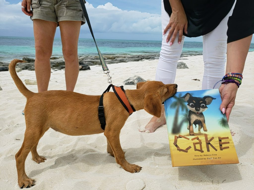 Potcake Puppy Biting a Book on the beach in Providenciales, Turks and Caicos