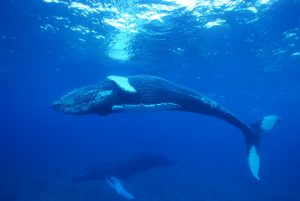 whale in turks and caicos